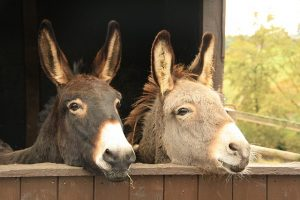 donkeys-happy-together